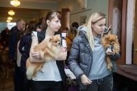 Всероссийская выставка собак 2017, Фото: 67