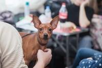 Всероссийская выставка собак 2017, Фото: 21