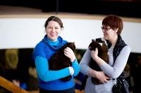 Выставка кошек. 4 и 5 апреля 2015 года в ГКЗ., Фото: 14
