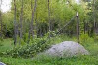 В Баташевском саду из-за непогоды упали вековые деревья, Фото: 8