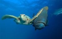 Категория «Под водой». Победитель. Фото: Трой Мэйн, Фото: 3