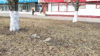 Сергей Шестаков: «В Туле началась масштабная уборка улиц», Фото: 11