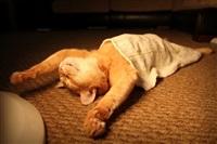 Спящие коты, Фото: 7