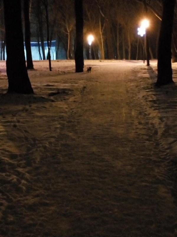 Весна 2016 года, только что осветили Рогожинский парк.