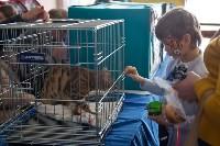 Выставка кошек в ГКЗ. 26 марта 2016 года, Фото: 33