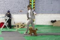 Выставка собак в Туле 14.04.19, Фото: 40
