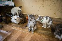 Волонтеры спасли кошек из адской квартиры, Фото: 47