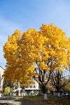 Золотая осень в Туле-2019, Фото: 60