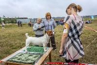 Международная выставка собак, Барсучок. 5.09.2015, Фото: 72