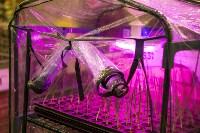 Леруа Мерлен: Какие выбрать семена и правильно ухаживать за рассадой?, Фото: 30