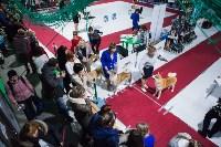 Выставка собак в Туле, Фото: 123