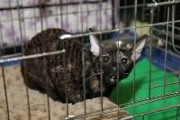 Выставка кошек. 21.12.2014, Фото: 20