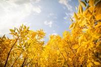 Золотая осень в Тульской области, Фото: 30