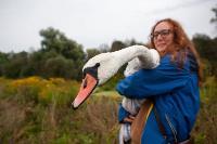 В Туле спасли лебедя с одним крылом, Фото: 39