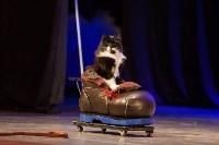 Театр кошек в ГКЗ, Фото: 24