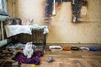 Волонтеры спасли кошек из адской квартиры, Фото: 20
