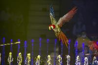 Шоу фонтанов «13 месяцев» в Тульском цирке – подарите себе и близким путевку в сказку!, Фото: 30