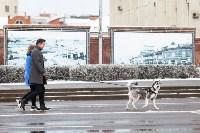 Мартовский снег в Туле, Фото: 10