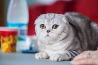 Международная выставка кошек. 16-17 апреля 2016 года, Фото: 75