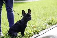 Рейд по выгулу собак в Центральном парке, Фото: 18