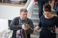 В Туле прошла выставка «Пряничные кошки» , Фото: 27