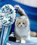 Выставка кошек, Фото: 9