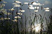 Летний день в Ясной Поляне, Фото: 49
