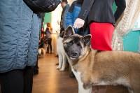 Выставка собак в Туле, 29.11.2015, Фото: 74