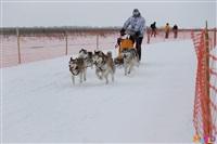 Куликово поле. Гонки на собачьих упряжках., Фото: 118