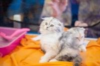 Международная выставка кошек. 16-17 апреля 2016 года, Фото: 96