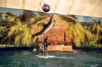 Шоу карибских дельфинов, Фото: 5