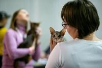Пряничные кошки, Фото: 16