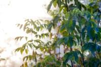 Центральный парк, утро, осень, Фото: 10