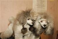 В Туле прошла всероссийская выставка собак, Фото: 24
