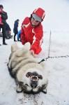 Праздник северных собак на Куликовом поле , Фото: 62