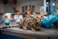 Экзотические животные в квартире, Фото: 32