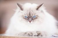 """Выставка """"Пряничные кошки"""". 15-16 августа 2015 года., Фото: 43"""