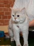 Выставка кошек в Искре, Фото: 65
