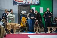 Выставка собак в Туле, Фото: 91