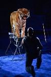 Цирковое шоу, Фото: 139