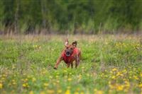 В Туле состоялись собачьи бега, Фото: 22