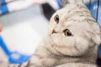 Международная выставка кошек. 16-17 апреля 2016 года, Фото: 24