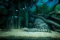 Тульский экзотариум: животные, Фото: 33