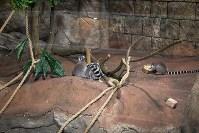 Тульский экзотариум: животные, Фото: 39