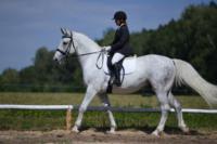В Ясной поляне стартовал турнир по конному спорту, Фото: 17
