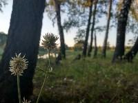 Эко-парк «Моя деревня», Фото: 46