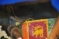 Мисс Цейлон, Фото: 10