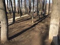 Субботник в Комсомольском парке с Владимиром Груздевым, 11.04.2014, Фото: 4