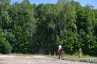 В Ясной поляне стартовал турнир по конному спорту, Фото: 100