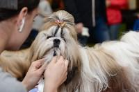 """Выставки собак в ДК """"Косогорец"""", Фото: 20"""